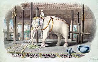320px-Lord_White_Elephant.jpg
