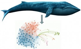 Organizational Change: from whales to networks