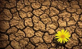 The Three Characteristics of Resilience